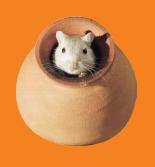 MouseInPot